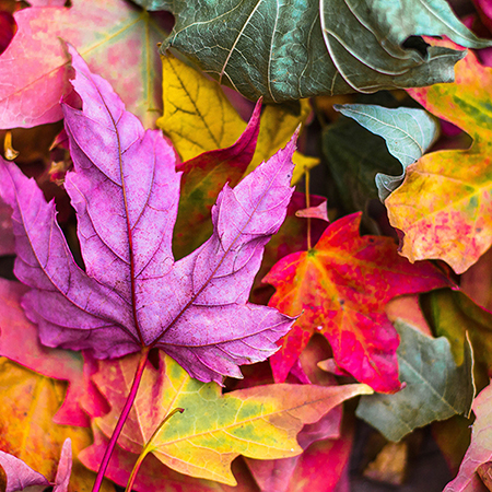 jeremy-thomas-79493-coloredleaves